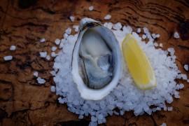 East Coast Tasmania, Oysters, Freycinet Marine Farm