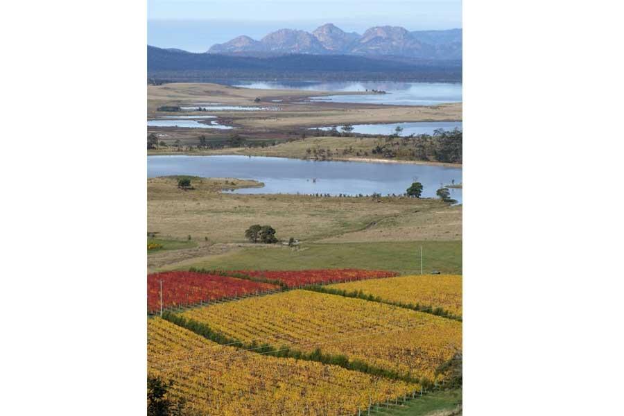 Wine region Tasmania