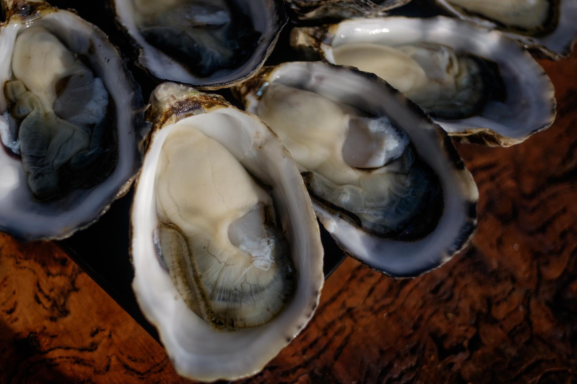 freycinet marine farm, oysters, east coast tasmania, great eastern drive